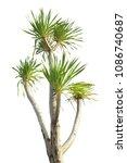 treetop green leaf tropical... | Shutterstock . vector #1086740687