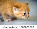 cute little kitten | Shutterstock . vector #1086805637