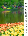 beautiful blooming tulips in... | Shutterstock . vector #1087151417