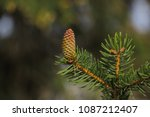 close up young green conifer... | Shutterstock . vector #1087212407