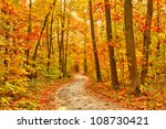 Pathway through the autumn forest - stock photo