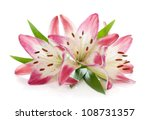 Stock photo three pink lily isolated on white background 108731357