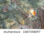 crowd of many different fish... | Shutterstock . vector #1087348097