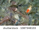 crowd of many different fish... | Shutterstock . vector #1087348103