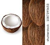 coconut. vector illustration | Shutterstock .eps vector #1087395653