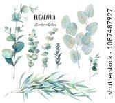 watercolor various eucalyptus... | Shutterstock . vector #1087487927