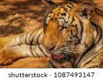 close up head shot full face of ... | Shutterstock . vector #1087493147