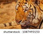 close up head shot full face of ... | Shutterstock . vector #1087493153