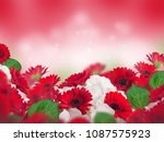 multicolored chrysanthemums on... | Shutterstock . vector #1087575923