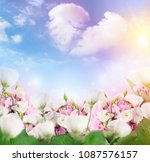 a bouquet of amazing eustoma on ... | Shutterstock . vector #1087576157