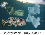 fish in polluted sea. plastic... | Shutterstock . vector #1087603517