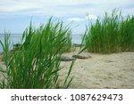 seaside greenery in the sandy...   Shutterstock . vector #1087629473