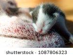 cute baby cat sleeping on... | Shutterstock . vector #1087806323