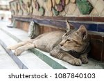 Small photo of A lazy brown cat doze off in the temple.