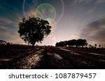 the solitary tree.  concept of... | Shutterstock . vector #1087879457