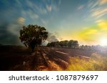 the solitary tree.  concept of... | Shutterstock . vector #1087879697