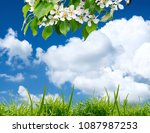 the beautiful white flowers... | Shutterstock . vector #1087987253