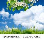 the beautiful white flowers... | Shutterstock . vector #1087987253