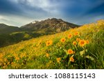 yellow spring wildflowers with... | Shutterstock . vector #1088115143