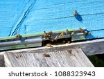 bee hive with bees on it | Shutterstock . vector #1088323943
