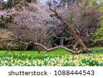 field of blooming  daffodils on ...   Shutterstock . vector #1088444543