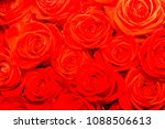 texture flowers red roses  ... | Shutterstock . vector #1088506613