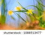 yellow forest flowers   spring... | Shutterstock . vector #1088513477