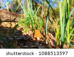 delicious mushroom among the... | Shutterstock . vector #1088513597