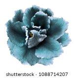 flower   turquoise  violets  on ... | Shutterstock . vector #1088714207