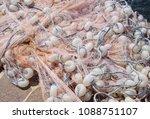 multi colored nylon fishing... | Shutterstock . vector #1088751107