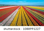 aerial view of the tulip fields ... | Shutterstock . vector #1088991227