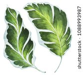 tropical leaves. watercolor...   Shutterstock . vector #1088993987