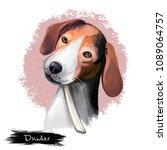 dog  animal  puppy  biology ... | Shutterstock . vector #1089064757