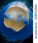 jellyfish | Shutterstock . vector #108913583