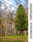 forest spring city | Shutterstock . vector #1089269063