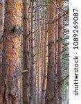 forest spring city | Shutterstock . vector #1089269087