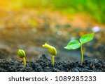 Small photo of Seed plants are growing.They are growing step by step.One has root and grow under the soil and the other seed has leaves.They are growing among sunlight.Photo new life and growing concept.