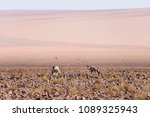 oryx grazing in the namib... | Shutterstock . vector #1089325943