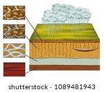 groundwater  groundwater... | Shutterstock . vector #1089481943