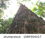 the timber tree of the... | Shutterstock . vector #1089504317