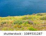ponta de sao lourenco in...   Shutterstock . vector #1089531287