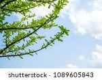 branches and leaves blue sky... | Shutterstock . vector #1089605843