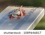 Small photo of Baseball cover frayed, tattered, and smashed onto stadium bleacher seats.