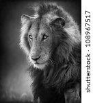 male lion portrait  artistic... | Shutterstock . vector #108967517