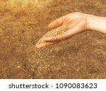 lawn grass seeds in a woman's... | Shutterstock . vector #1090083623