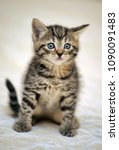Stock photo small striped kitten on a light background 1090091483