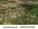 patchy grass with dead spots... | Shutterstock . vector #1090332983