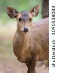 Small photo of Dear portrait in nature, dear head with eye contact on blurry shallow background, Wildlife animal, herbivore
