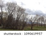 a grove of bare trees and... | Shutterstock . vector #1090619957