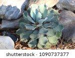 Cactus Plant With Gray Rocks